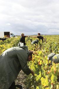 En Champagne, la convention collective prévoit le versement d'une indemnité de fin de contrat à hauteur de 10% du salaire brut total pour les emplois saisonniers. ©J.-C.GUTNER