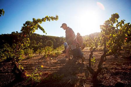 Les plus jeunes vignerons sont les plus optimistes sur l'avenir de la viticulture. ©G.BARTOLI