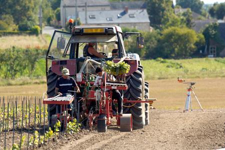 La France veut défendre à Bruxelles une politique européenne « permettant de maîtriser les plantations de vignes ». © WATIER VISUEL