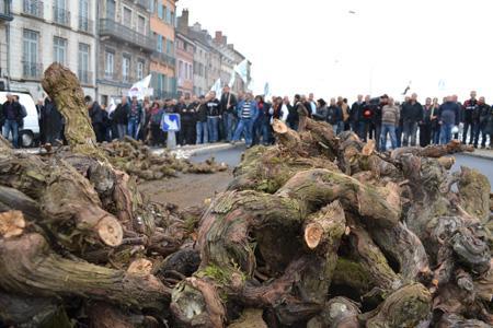 Les manifestants ont déchargé des ceps morts de l'esca dans plusieurs endroits de Mâcon, en Saône-et-Loire, pour protester contre le fait que le coût du remplacement de ces ceps a doublé en l'espace de quatre ans. © C. MICHELIN