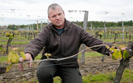 Guillaume Gracieux, chef de culture aux vignobles Massé, situés à Pompignac (en Gironde). © P. ROY