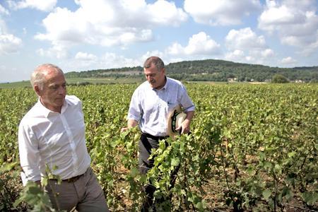 François Patriat, à gauche, président PS de la région Bourgogne, est allé constaté les dégâts causés dans les vignes par les orages du 23 juillet. ©S.CAROLINEDÉTÉ/MAXPPP