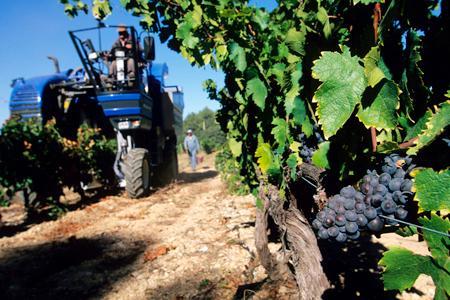 En côtes du Rhône, les professionnels dénoncent les manœuvres de certains négociants pour acheter de la vendange fraîche aux viticuteurs en coop. ©J.NICOLAS