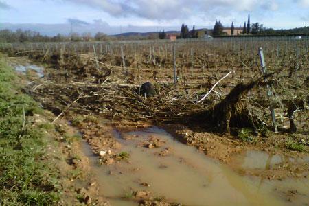 Inondations à Bizanet, dans l'Aude, où les vignes à proximité des cours d'eau ont subi des dégâts. ©CHAMBRED'AGRICULTURE DE L'AUDE