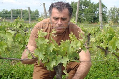 """Ludovic Barthe met les vignes du domaine du Grand Bireau en """"adoption-location"""" grâce à la Bireau Box."""