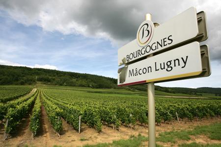 Bourgogne : Lugny veut devenir la 101e appellation. © BIVB/D. GILLET