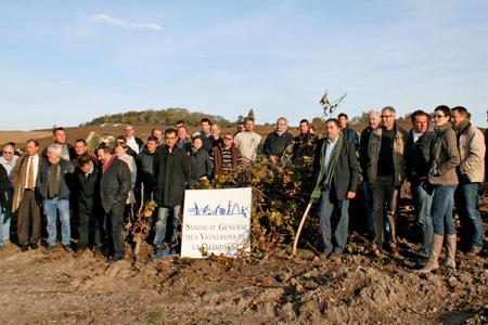 Le syndicat des vignerons et 25 viticulteurs arrachent 3 ha de vignes. © A. LUTUN