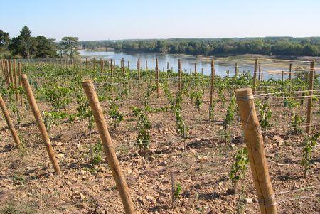 417ha de plantations nouvelles en AOC ont été demandés et validés par le conseil de bassin Val de Loire-Centre. © P. TOUCHAIS