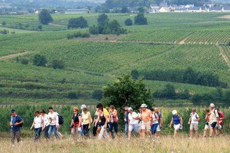 En 2011, 6000marcheurs s'étaient déplacé pour Vignes, vins et randos. Cette année, InterLoire attend 8000 participants. © P. TOUCHAIS