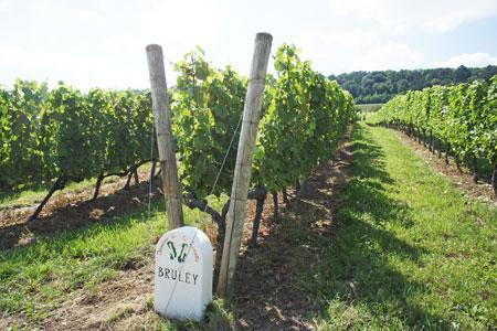 Marc Laroppe, viticulteur àBruley (Meurthe-et-Moselle), a commandé une borne auxtailleurs de pierre Francis Detré et safille Camille pour sondomaine de laLinotte.
