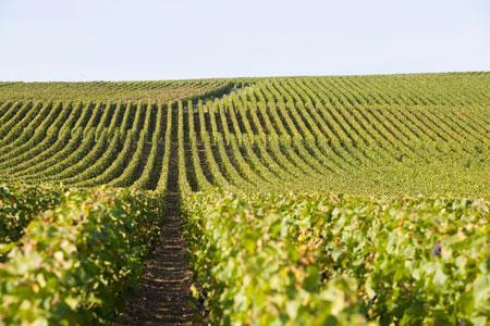 En Champagne, le prix de l'hectare atteint 1,123 million d'euros en 2014. ©C.THIRIET