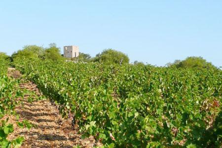 2014: une belle année pour l'appellation Fitou dans leLanguedoc. ©FITOU AOC