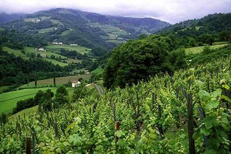 Une troisième année consécutive qui s'annonce difficile pour lesvignerons d'Irouléguy (Pyrénées-Atlantiques). ©P.ROY