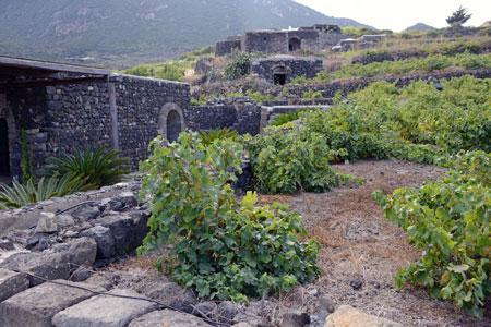 Les vignes taillées en gobelet de l'île de Pantelleria inscrites au patrimoine culturel immatériel de l'humanité. © P. BOURGAULT
