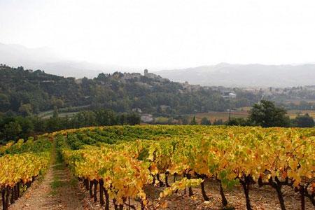 L'AOC Vinsobres frise les 20000hl de production. ©ODG