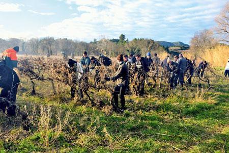 En une journée, les jeunes bénévoles ont nettoyé et redressé une quinzaine d'hectares de vignes.