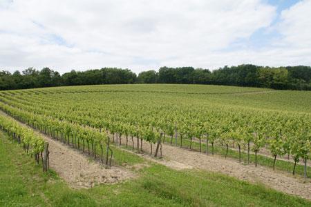 La parcelle étudiée possède une grande biodiversité. ©CA Charente