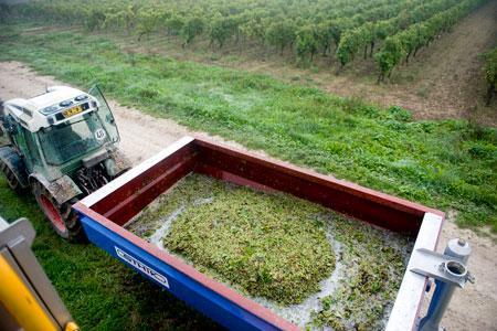 L'interprofession du cognac parie sur un beau volume à la récolte. ©J.-M.NOSSANT
