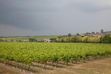 L'UGVC s'étonne des demandes élevées d'autorisations de plantations nouvelles en vins sans IG dans le cognaçais. ©S.CHAMPION