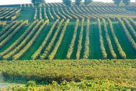 La demande de plantation de 400ha en VSIG a été refusée par les représentants du vignoble. ©J.-M.NOSSANT