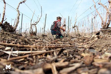 Carine Charlier photographie chaque étape du travail des vignerons. ©C.CHARLIER