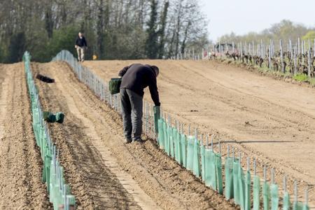 Le site detéléprocédure Vitiplantation ouvrira le 18mai prochain. ©C.WATIER