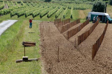 La décision finale de plantation sera prise par les instances nationales. ©J.-M. NOSSANT