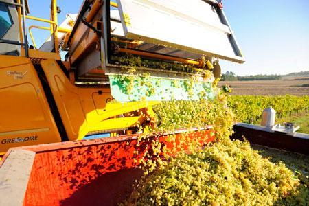 Les estimations pour la récolte2015 ont été revues à lahausse. ©J.-M.NOSSANT