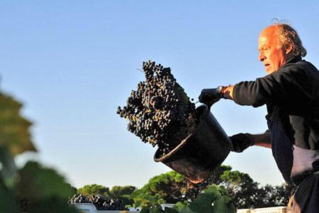 Les vendanges en Provence sont terminées depuis fin septembre. ©CIVP/F.MILLO