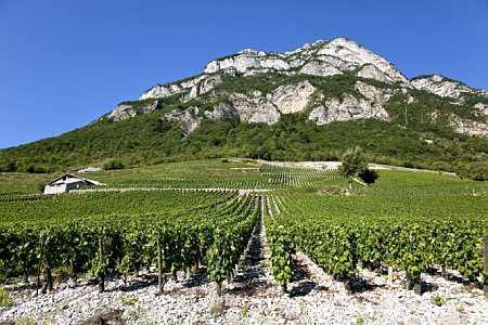 Les vignerons savoyards demandent unedérogation pour pouvoir utiliser lesfusées antigrêle 614E. ©P.ROY