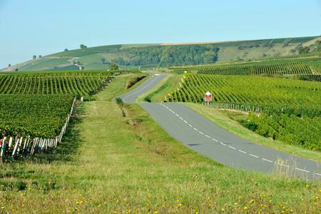 Deux mille jeunes pieds de vigne ont été volés dans le vignoble de Sancerre. ©P. MONTIGNY/FILIMAGES