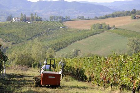 L'Italie s'attend à une très faible récolte en 2014. ©D.FRACCHIA/REA