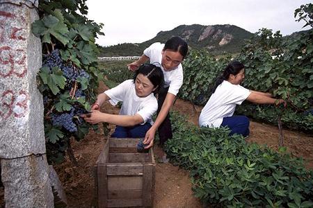L'enquête antidumping lancée par la Chine contre les exportateurs de vins européens devait se pencher sur les subventions au secteur viticole dans l'Union européenne et leur impact sur la production de vin en Chine. ©PHOTONONSTOP