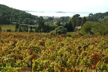 Les vignerons de l'appellation et la Coordination rurale du Var se mobilisent contre un projet de construction de stade à la place de vignes en AOC Bandol.