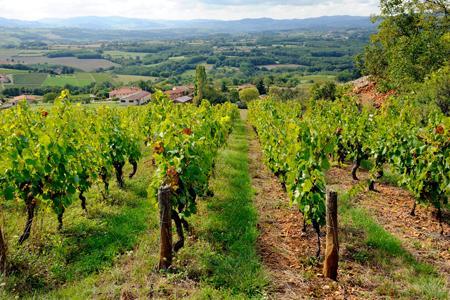 Dans le vignoble du Beaujolais, lesreprésentants de laproduction ont pratiqué la politique de lachaise vide lors duconseil d'administration del'interprofession. ©J.-F.MARIN