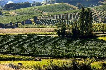 L'état du vignoble est favorable mais des incertitudes demeurent quant aux prévisions de récolte, notamment à cause des épisodes de grêle de ces dernières semaines. ©P.ROY