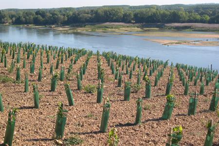 Plantations nouvelles en bordure de la Loire ©Patrick Touchais