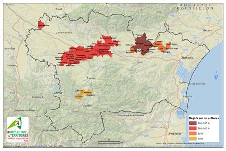 Dégâts causés par la grêle sur les cultures, dans l'Aude, le 6 juillet 2014. ©Chambre d'agriculture de l'Aude