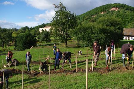 Trois associations alsaciennes ont planté vingt-quatre cépages anciens à Obermorschwihr, dans le Haut-Rhin. © A. WANNER