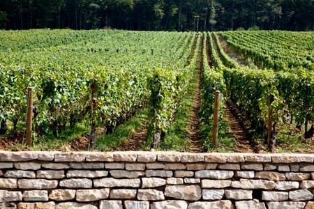 En France, le terme «clos» impose que les raisins proviennent exclusivement de parcelles de vignes effectivement délimitées par une clôture formée de murs ou de haies vives ou dont l'appellation ou la parcelle comporte ce terme. © P. ROY
