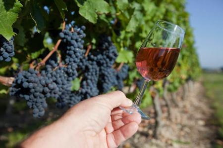 Le syndicat des Côtes du Rhône appelle à la prudence sur la production des rosés. ©C.WATIER