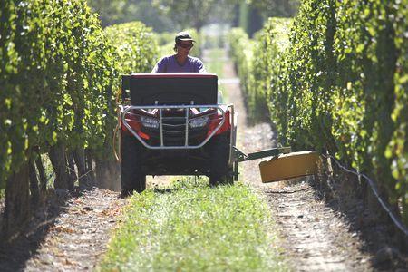 Désherbage sur vignes. © C. WATIER
