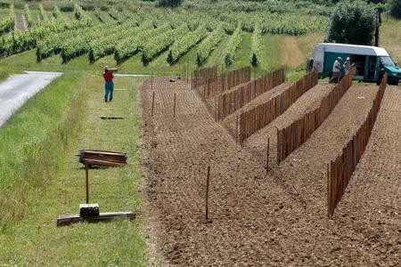Le prix des droits de plantation a été quasiment divisé par deux en cinq ans. © J.-M. NOSSANT