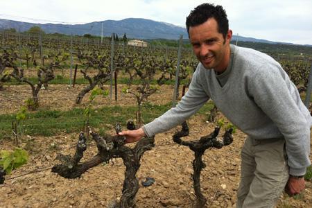 Sébastien Vincenti, viticulteur dans le Vaucluse, nous montre un cep qui n'avait toujours pas débourré le 26avril. © C. SARRAZIN