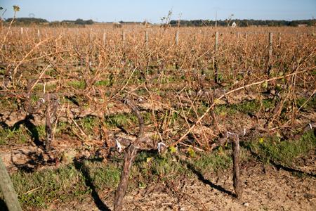 Dégâts de grêle sur des vignes de l'Entre-deux-Mers, à Grézillac, en Gironde, lors de l'orage du 2 août 2013. ©P.ROY