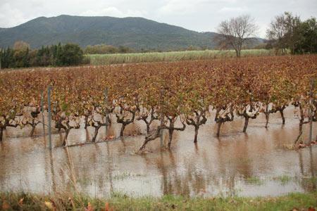 Les vignes de la plaine de l'Argens ont été particulièrement touchées. © NICE MATIN/C. CHAVIGNAUD