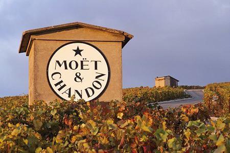 Si l'achat de vignes par des maisons pour assurer leur approvisionnement est fréquent en Champagne, cette pratique tend à s'étendre dans la plupart des bassins viticoles. ©PHOTONONSTOP
