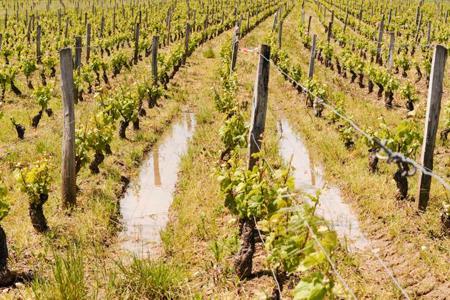 Suite aux intempéries, les sols sont gorgés d'eau. © C. FAIMALI/GFA