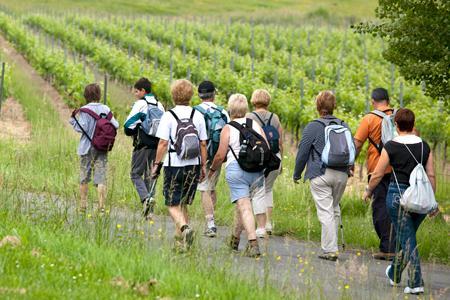 Bordeaux : le conseil général veut tracer les Routes du vin. © P. ROY