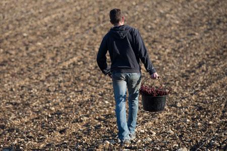Les viticulteurs vont pouvoir déposer des demandes de plantations nouvelles de vins sans IG. ©P.GLEIZES